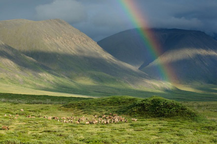 Photo Credit: Florian Schulz [ourarcticrefuge.org]
